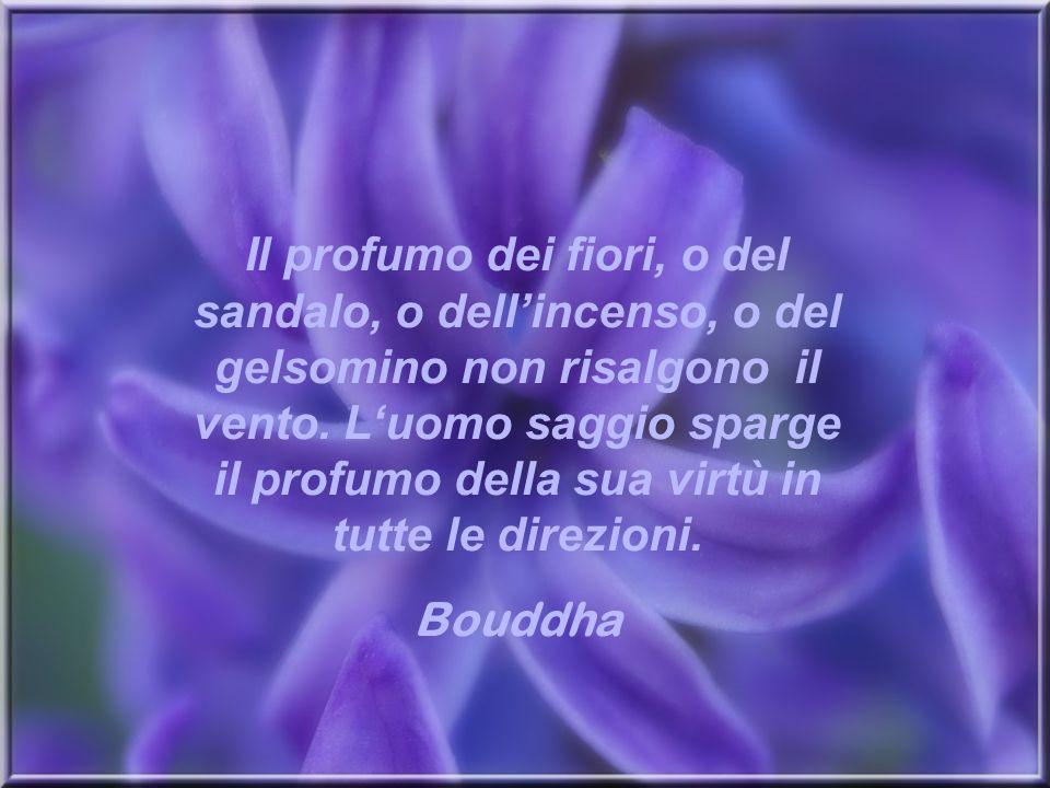 Il profumo dei fiori, o del sandalo, o dell'incenso, o del gelsomino non risalgono il vento. L'uomo saggio sparge il profumo della sua virtù in tutte le direzioni.