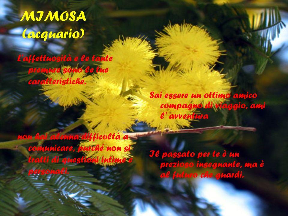 MIMOSA (acquario) L affettuosità e le tante premure sono le tue caratteristiche.
