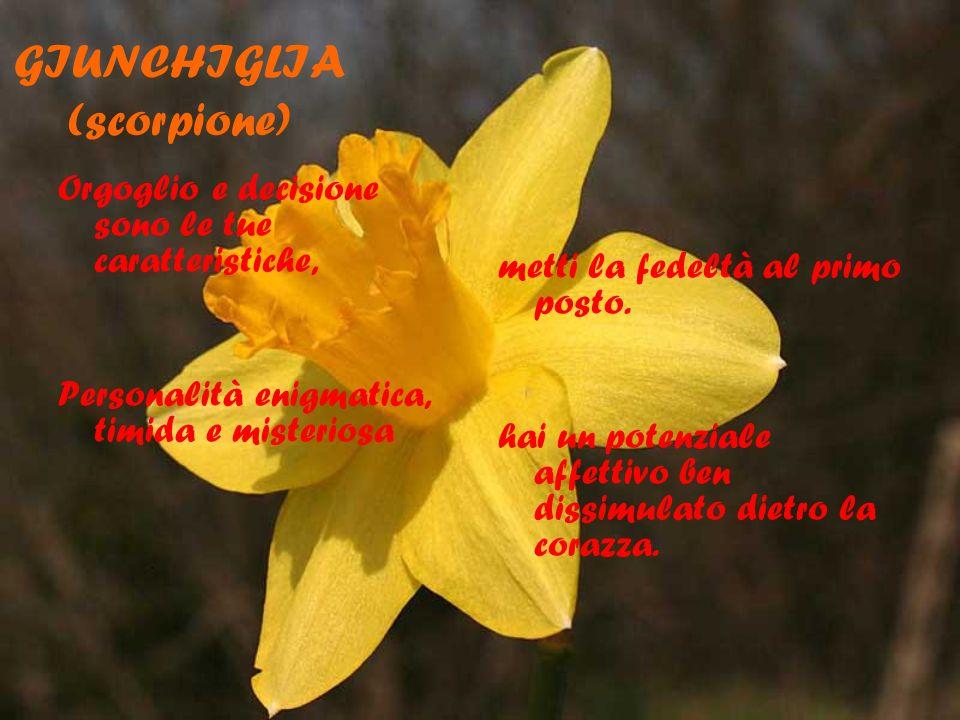 GIUNCHIGLIA(scorpione)