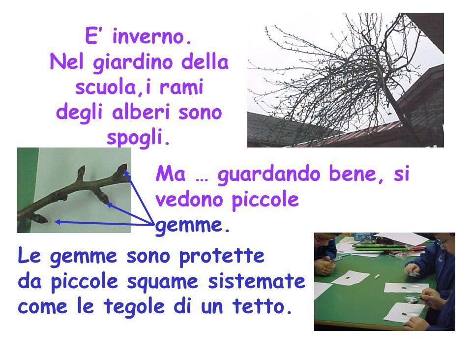 E' inverno. Nel giardino della scuola,i rami degli alberi sono spogli.