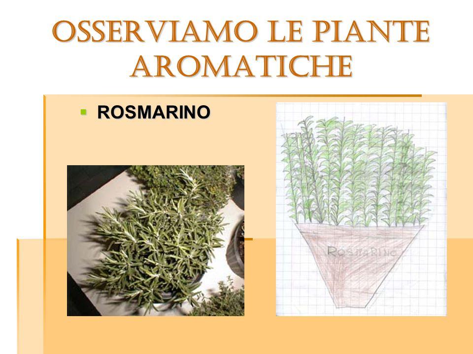 OSSERVIAMO LE PIANTE aromatiche