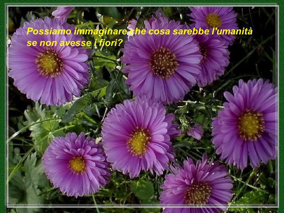 Possiamo immaginare che cosa sarebbe l umanità se non avesse i fiori