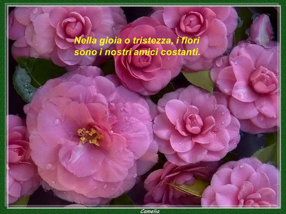 Nella gioia o tristezza, i fiori sono i nostri amici costanti.