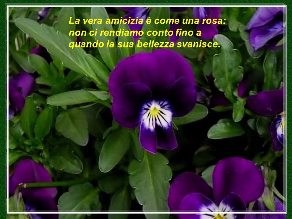 La vera amicizia è come una rosa: non ci rendiamo conto fino a quando la sua bellezza svanisce.
