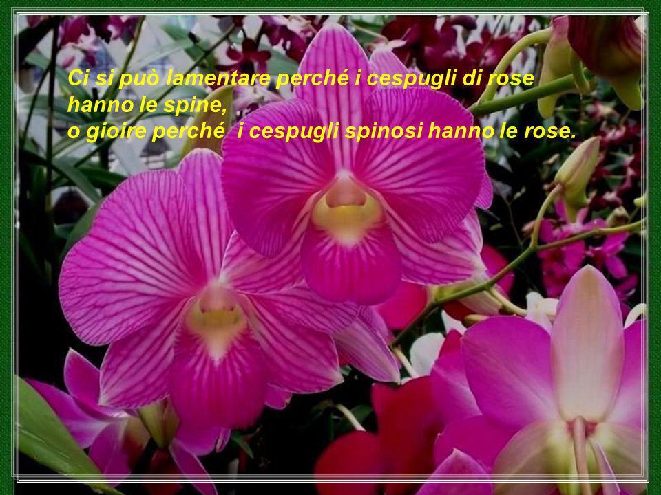 Ci si può lamentare perché i cespugli di rose hanno le spine, o gioire perché i cespugli spinosi hanno le rose.