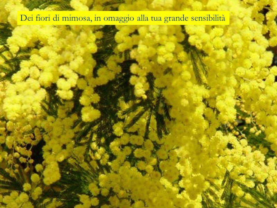 Dei fiori di mimosa, in omaggio alla tua grande sensibilità