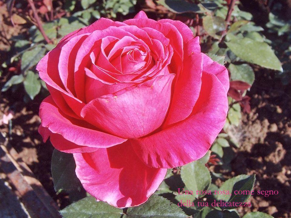 Una rosa rosa, come segno della tua delicatezza
