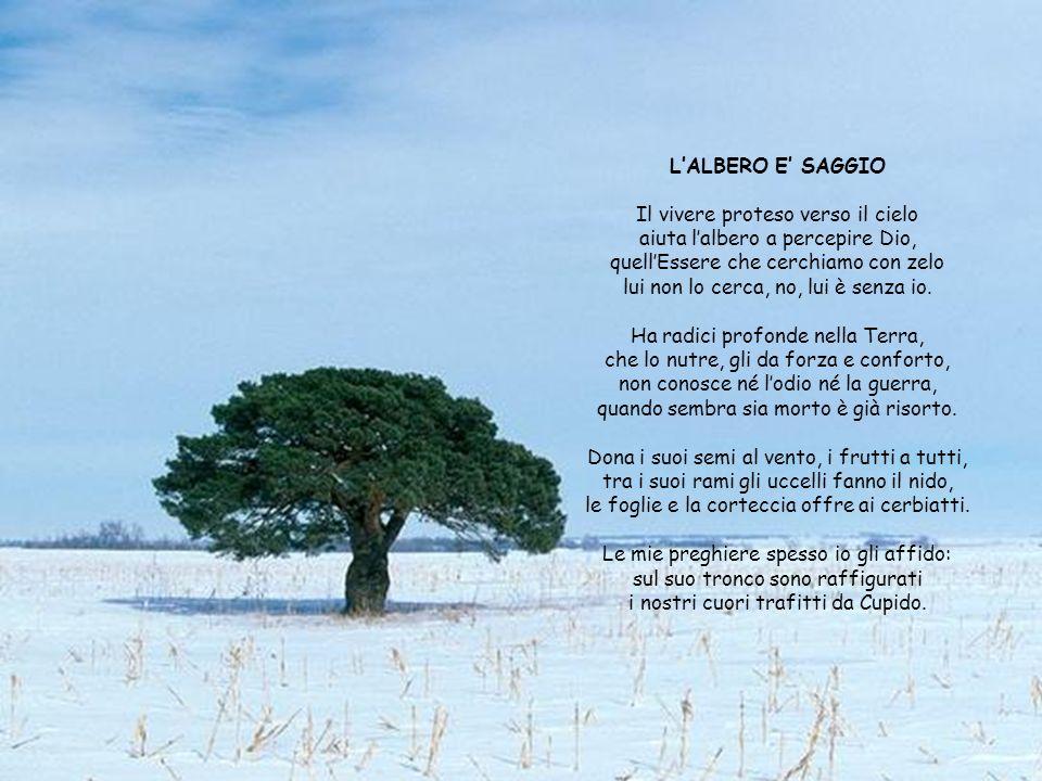 Il vivere proteso verso il cielo aiuta l'albero a percepire Dio,
