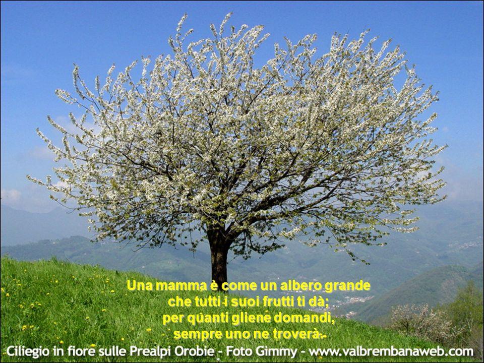 Una mamma è come un albero grande che tutti i suoi frutti ti dà;
