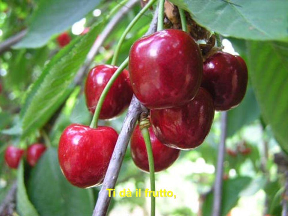 Ti dà il frutto,