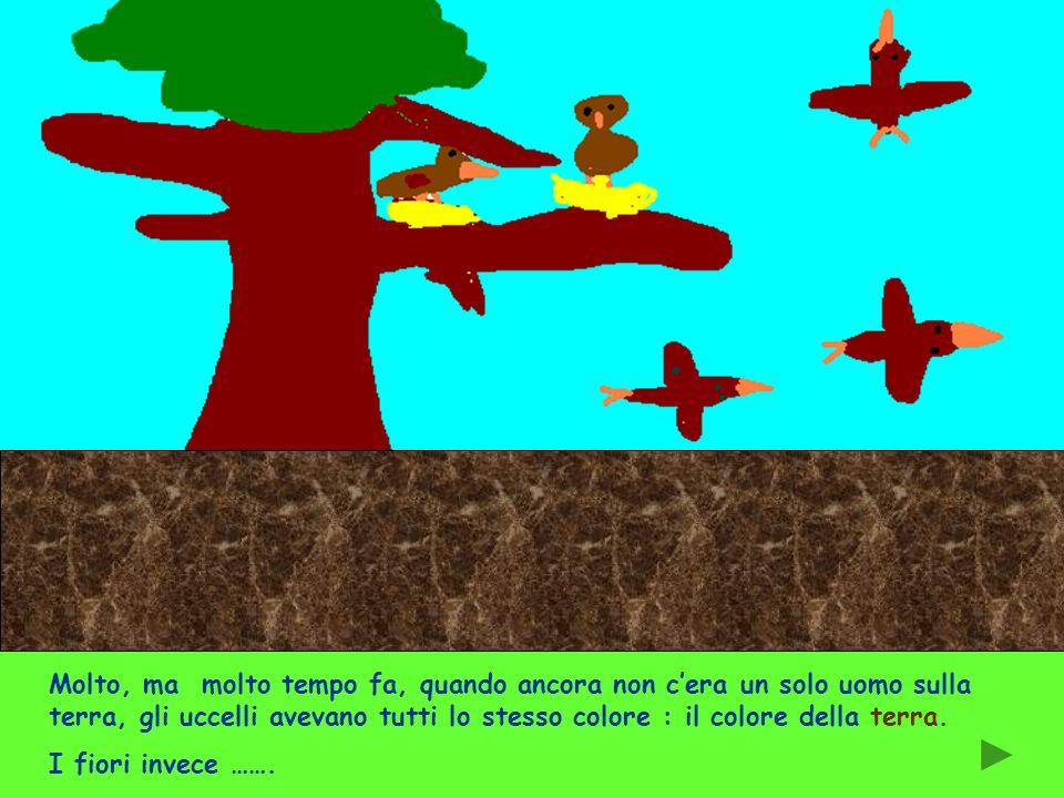 Molto, ma molto tempo fa, quando ancora non c'era un solo uomo sulla terra, gli uccelli avevano tutti lo stesso colore : il colore della terra.
