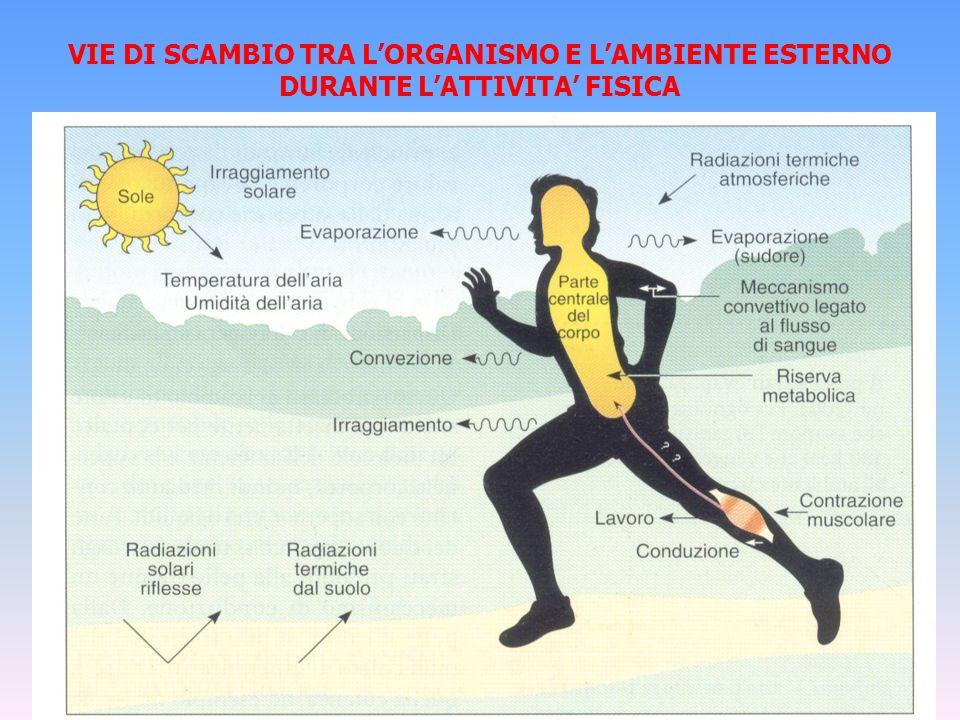 VIE DI SCAMBIO TRA L'ORGANISMO E L'AMBIENTE ESTERNO DURANTE L'ATTIVITA' FISICA