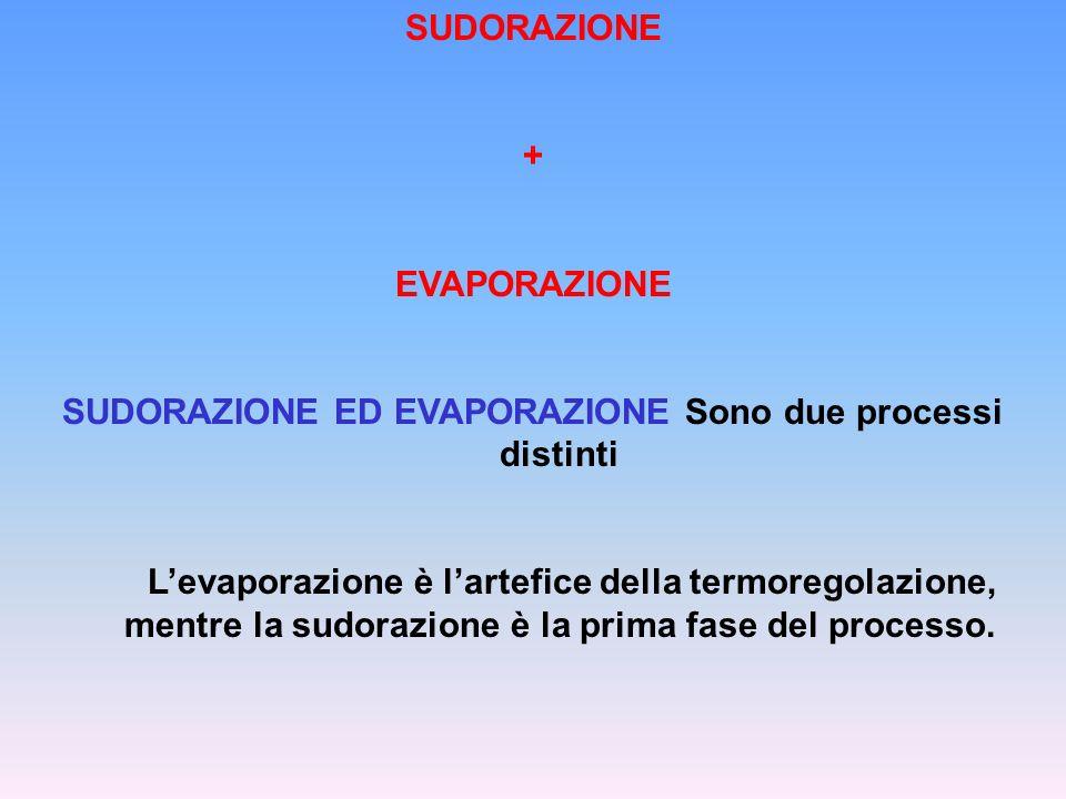 SUDORAZIONE ED EVAPORAZIONE Sono due processi distinti