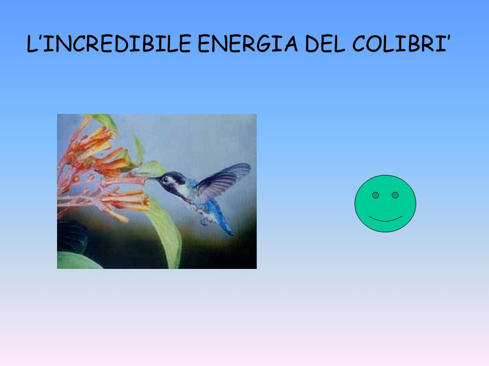 L'INCREDIBILE ENERGIA DEL COLIBRI'