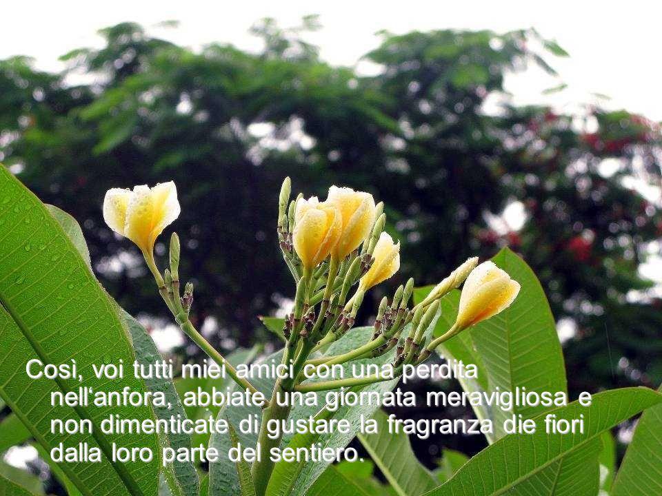 Così, voi tutti miei amici con una perdita nell'anfora, abbiate una giornata meravigliosa e non dimenticate di gustare la fragranza die fiori dalla loro parte del sentiero.