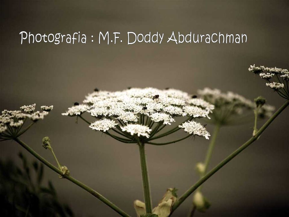 Photografia : M.F. Doddy Abdurachman