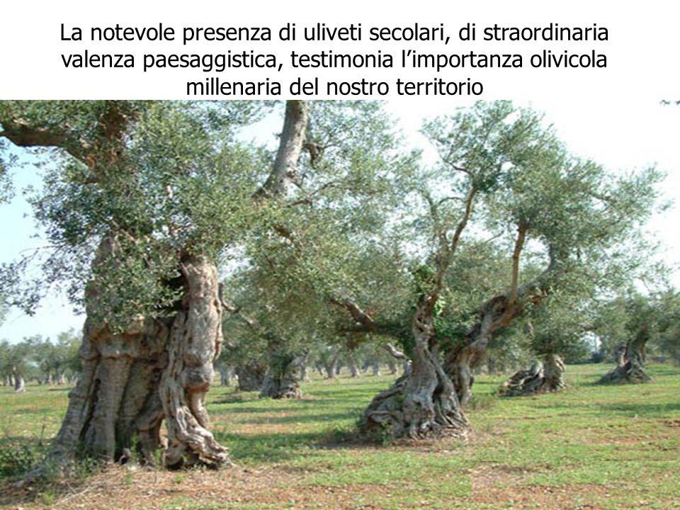 La notevole presenza di uliveti secolari, di straordinaria valenza paesaggistica, testimonia l'importanza olivicola millenaria del nostro territorio