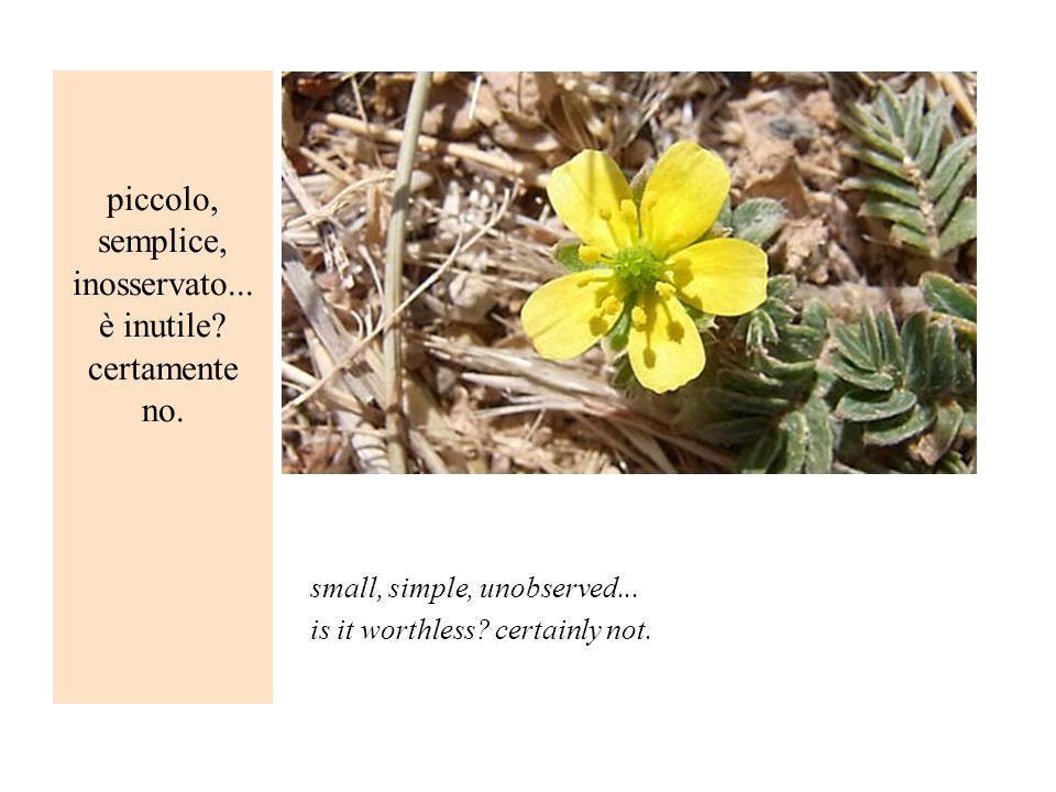 piccolo, semplice, inosservato... è inutile certamente no.