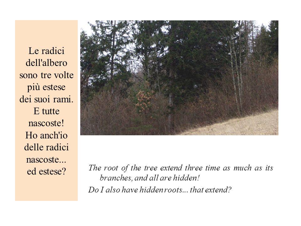 Le radici dell albero sono tre volte più estese dei suoi rami
