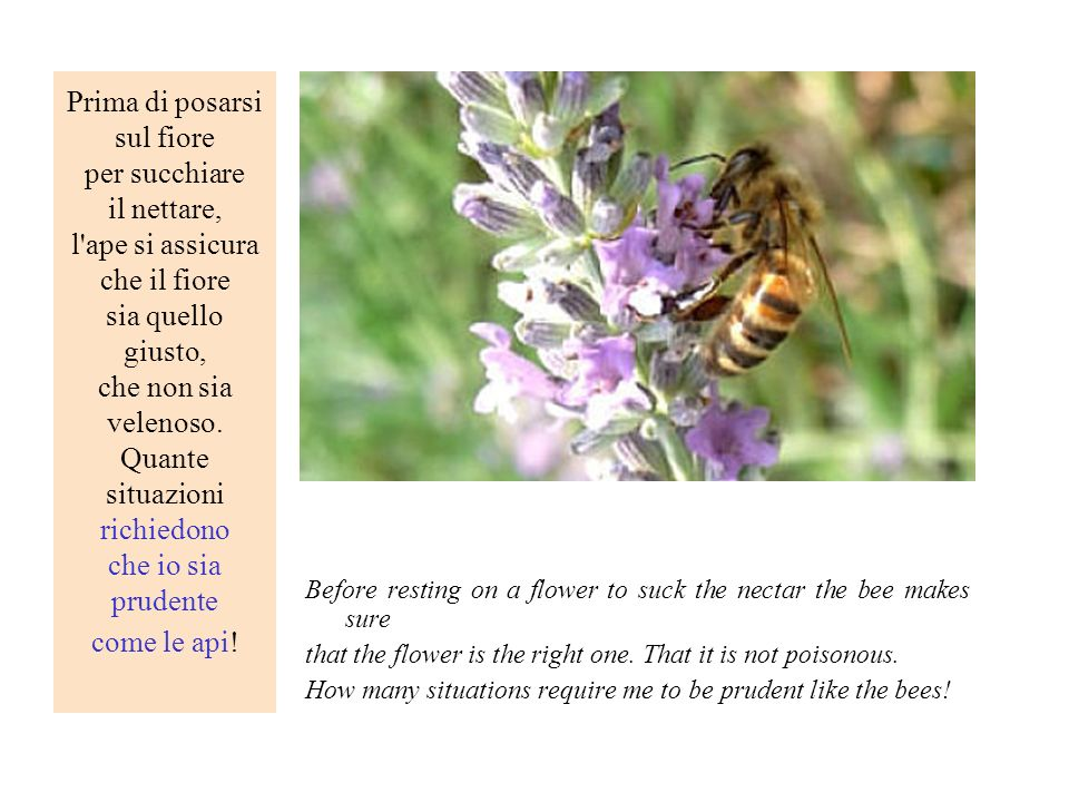 Prima di posarsi sul fiore per succhiare il nettare, l ape si assicura che il fiore sia quello giusto, che non sia velenoso. Quante situazioni richiedono che io sia prudente come le api!
