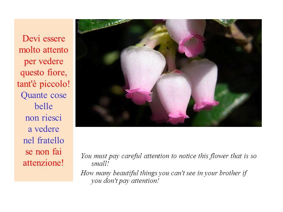 Devi essere molto attento per vedere questo fiore, tant è piccolo
