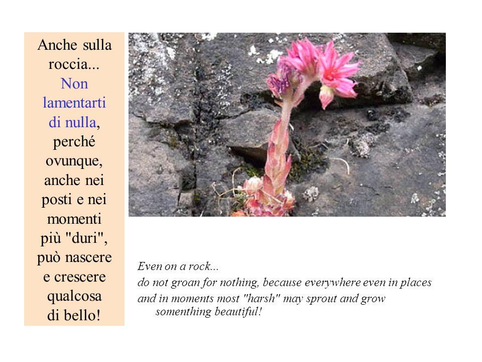 Anche sulla roccia... Non lamentarti di nulla, perché ovunque, anche nei posti e nei momenti più duri , può nascere e crescere qualcosa di bello!
