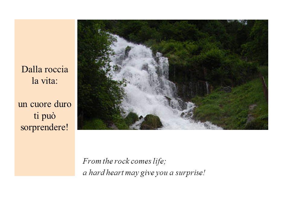 Dalla roccia la vita: un cuore duro ti può sorprendere!