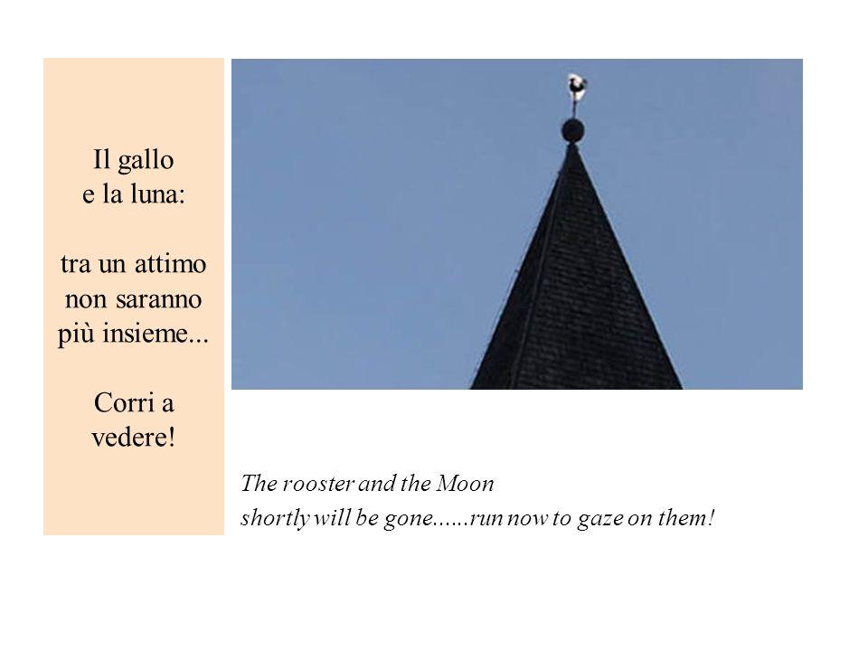 Il gallo e la luna: tra un attimo non saranno più insieme
