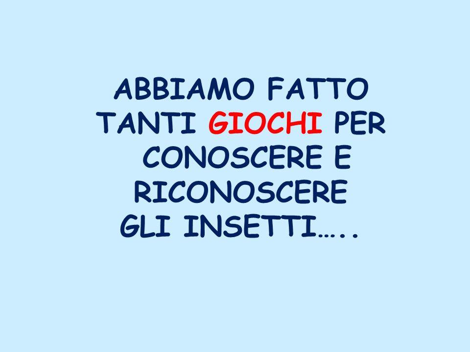 ABBIAMO FATTO TANTI GIOCHI PER CONOSCERE E RICONOSCERE GLI INSETTI…..