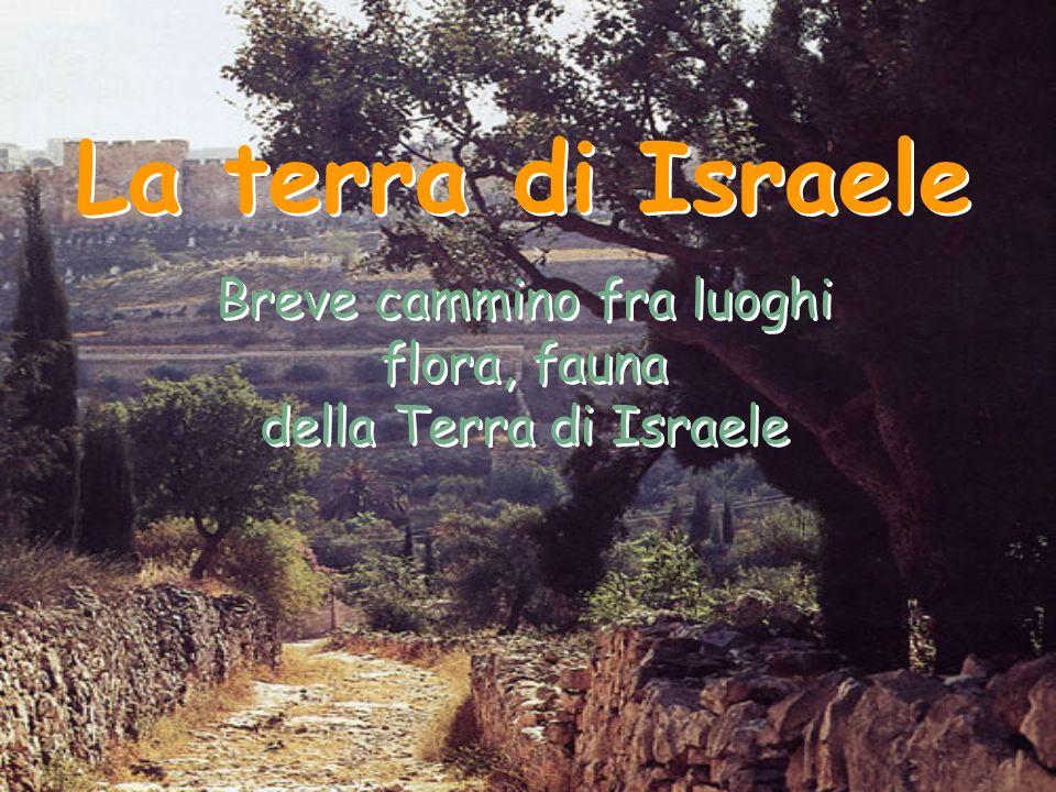 Breve cammino fra luoghi flora, fauna della Terra di Israele