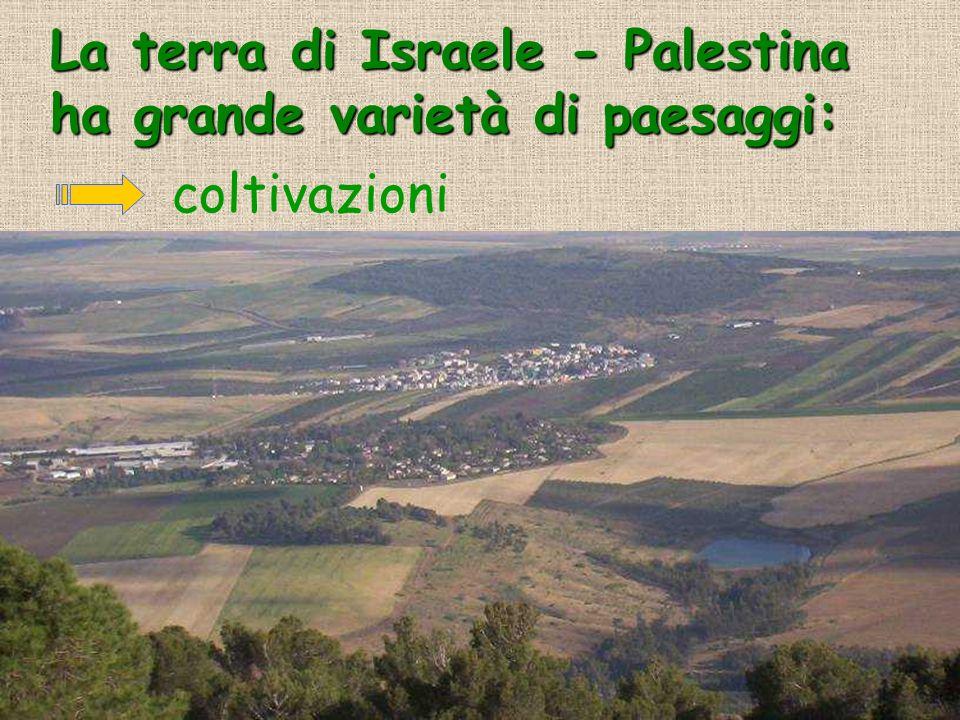 La terra di Israele - Palestina ha grande varietà di paesaggi: