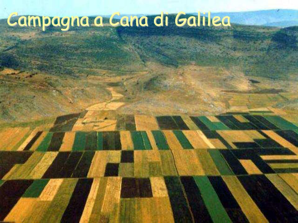 Campagna a Cana di Galilea