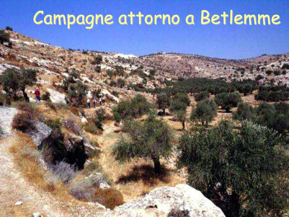 Campagne attorno a Betlemme