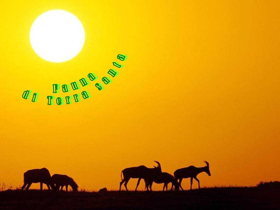 di Terra santa Fauna