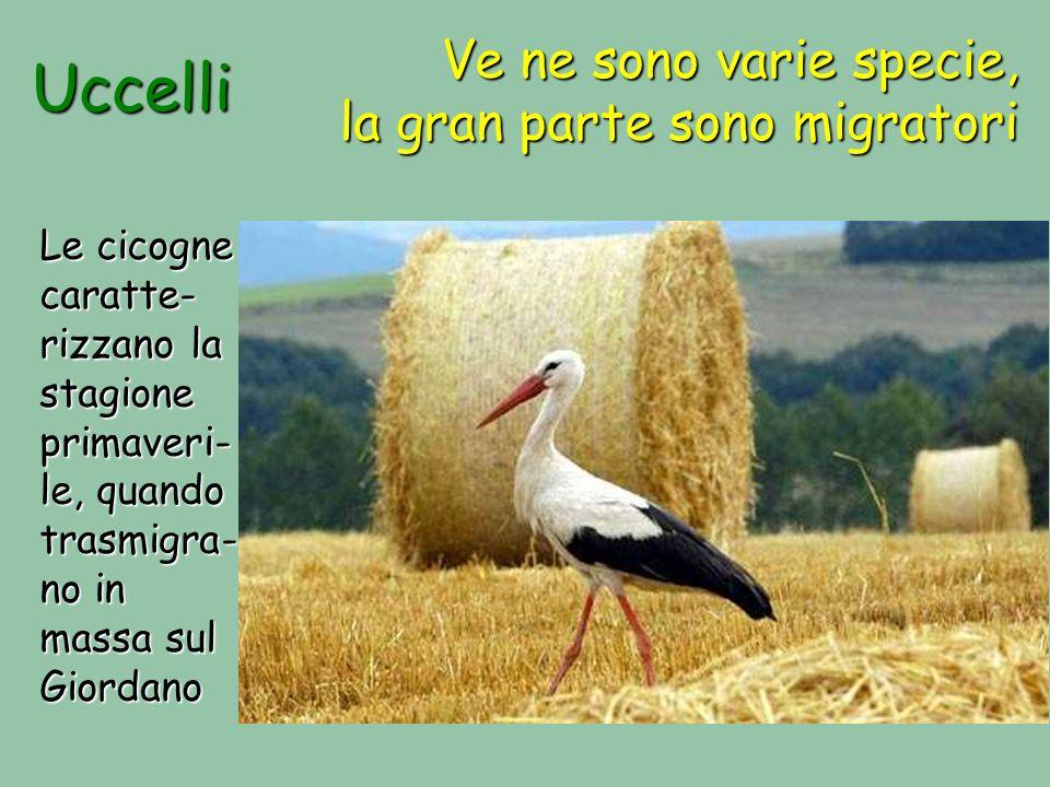 Uccelli Ve ne sono varie specie, la gran parte sono migratori