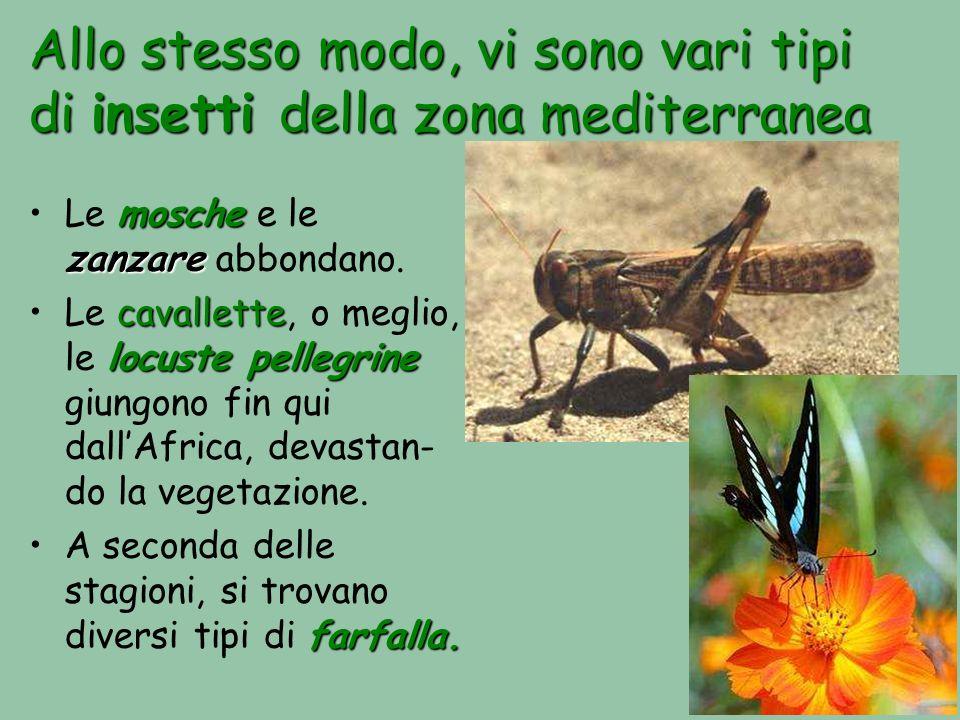Allo stesso modo, vi sono vari tipi di insetti della zona mediterranea