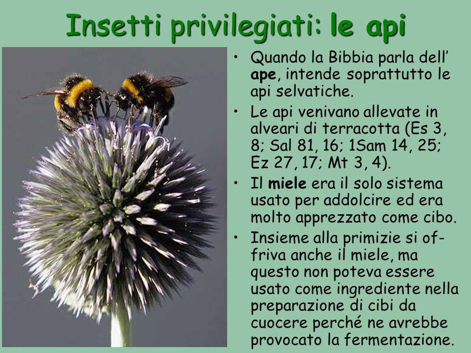 Insetti privilegiati: le api