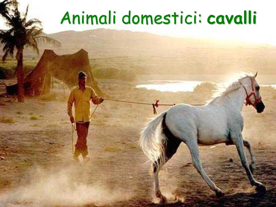 Animali domestici: cavalli