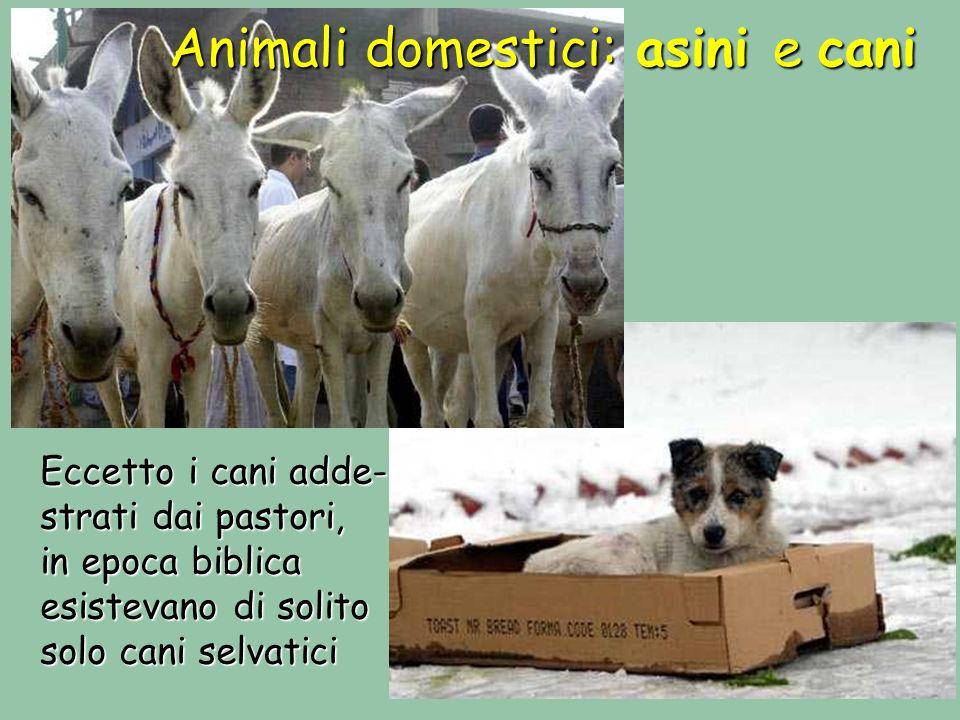 Animali domestici: asini e cani