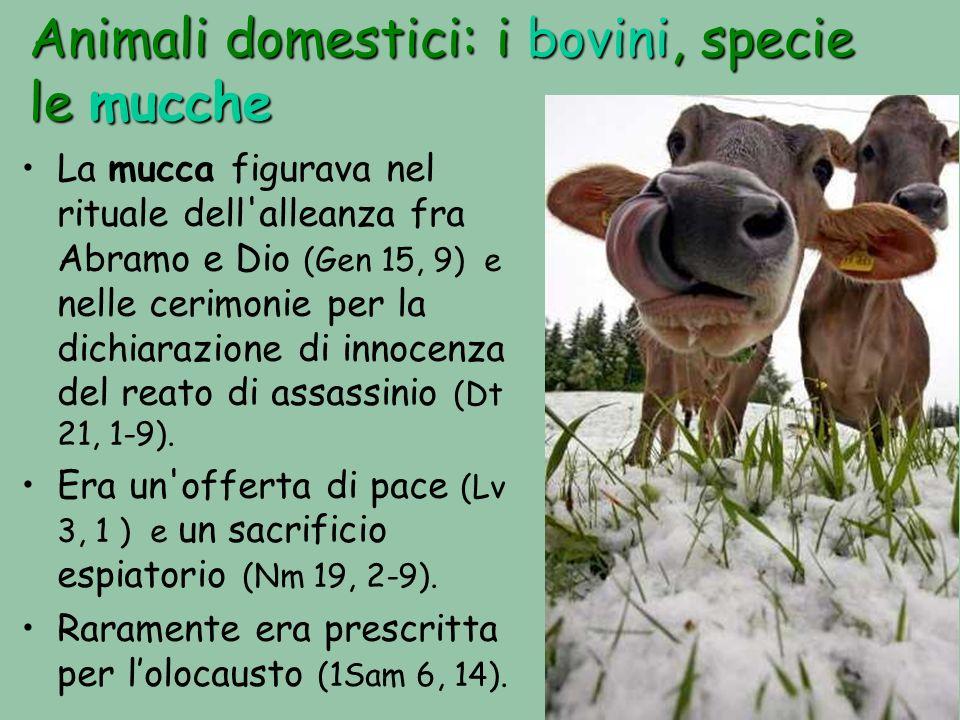 Animali domestici: i bovini, specie le mucche