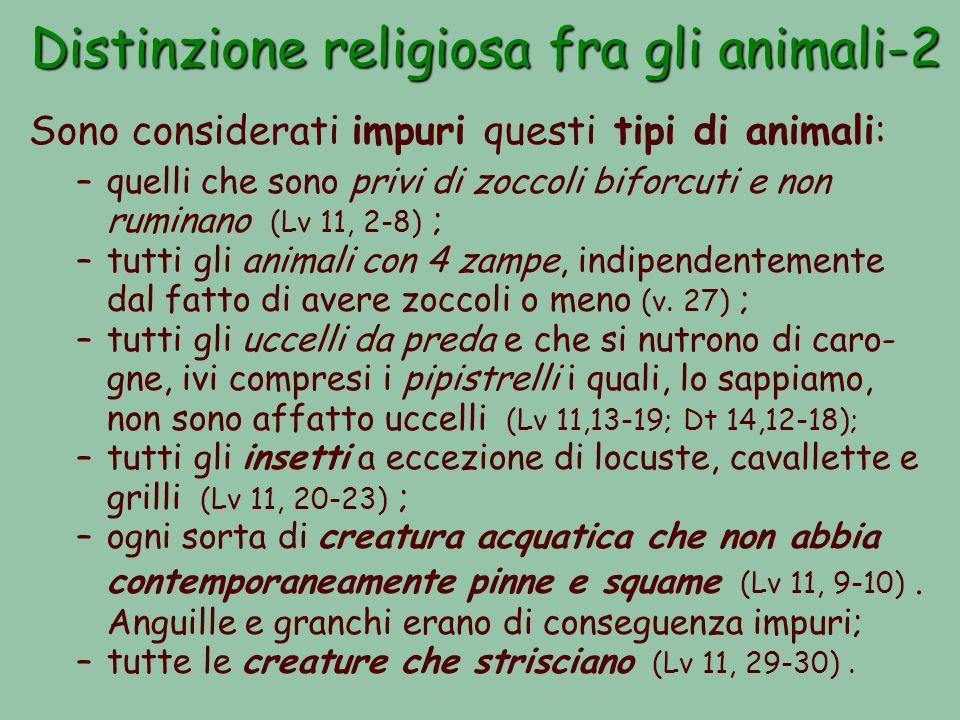Distinzione religiosa fra gli animali-2