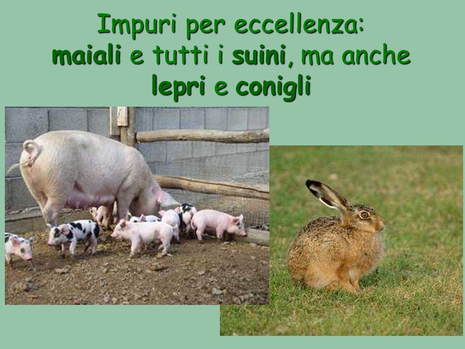 Impuri per eccellenza: maiali e tutti i suini, ma anche lepri e conigli