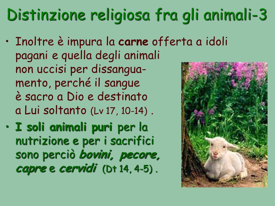 Distinzione religiosa fra gli animali-3