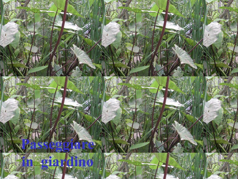 Passeggiare in giardino