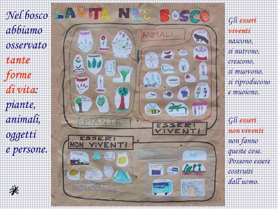 Nel bosco abbiamo osservato tante forme di vita: piante, animali, oggetti e persone.