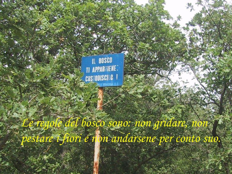 Le regole del bosco sono: non gridare, non pestare i fiori e non andarsene per conto suo.