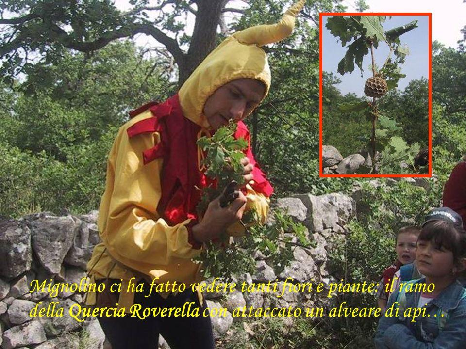 Mignolino ci ha fatto vedere tanti fiori e piante: il ramo della Quercia Roverella con attaccato un alveare di api…