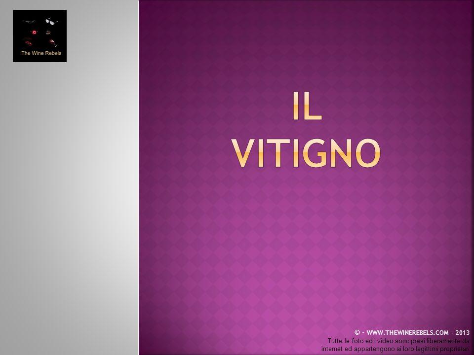 IL VITIGNO © - WWW.THEWINEREBELS.COM – 2013