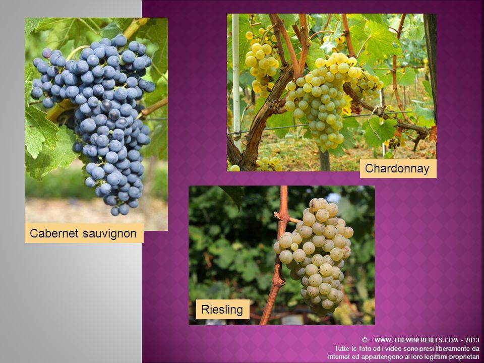 Chardonnay Cabernet sauvignon Riesling