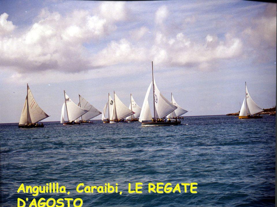 Anguillla, Caraibi, LE REGATE D'AGOSTO